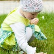 Little girl picking camomiles - Stock Photo