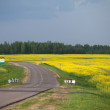 Empty road and yellow rape field — Stock Photo #31239071