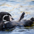 Swimming otter — Stock Photo #34542865
