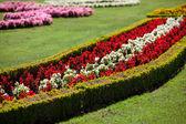 Beautiful flowers in summer Schonbrunn park — Stock Photo