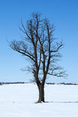 Tree among snowy field — Stock Photo