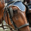 Horse-driven carriage — Stockfoto