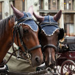 Horse-driven carriage — Foto de Stock