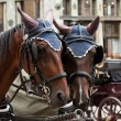 Horse-driven carriage — Stock fotografie