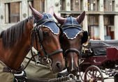 Horse-driven carriage — Stock Photo