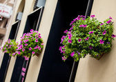 Floralpots — Stock Photo