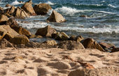 Summer beach — Stock Photo