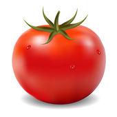 トマト — ストックベクタ