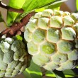 Stock Photo: Custard Apple