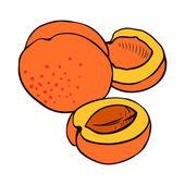Apricot illustration — Stock Vector