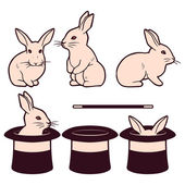 White rabbits and cylinders magic performance — Vector de stock