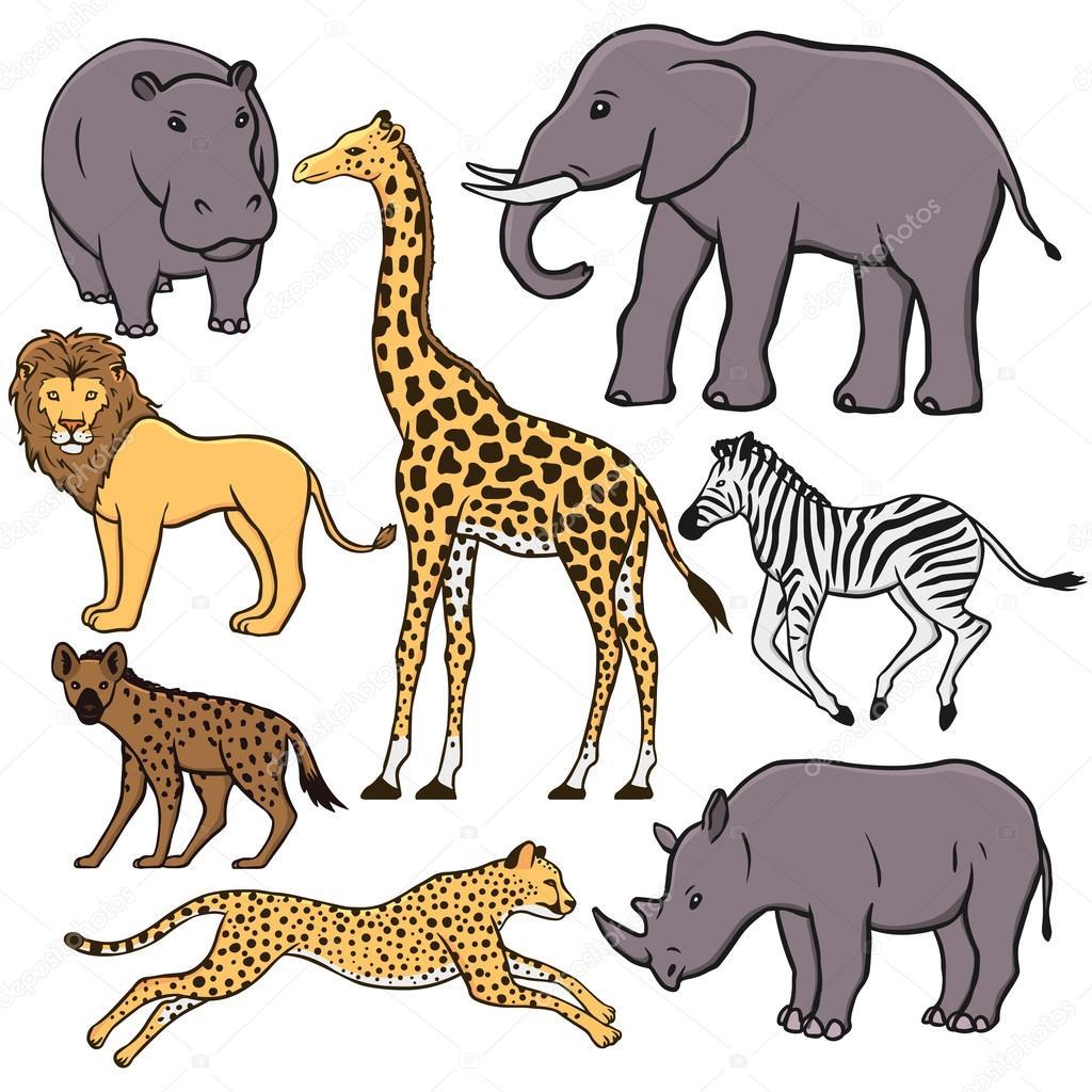 非洲的动物一组
