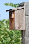 Bird house in vineyard — Stock Photo