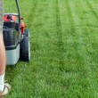 Stock Photo: Grass mowing