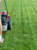 Grass mowing — Stock Photo