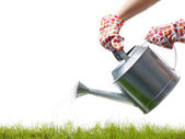 Grass watering — Stock Photo