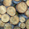 Birchwood logs — Stock Photo