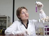 Biomedicinsk analytiker med preparatet — Stockfoto