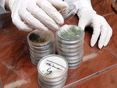 Petri dishes — Stock Photo
