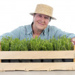 Stock Photo: Senior gardener with box of aspic