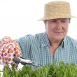 Stock Photo: Senior gardener forming aspic seedlings