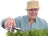 Senior gardener forming aspic seedlings — Stock Photo