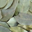 Bay leaves — Stock fotografie