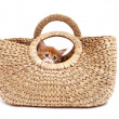 Kitten in textile bag — Lizenzfreies Foto