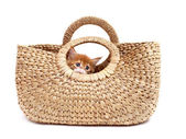 Kitten in textile bag — Foto Stock