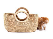 Kitten and textile bag — Foto Stock