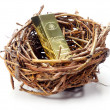 Gold bar in bird's nest — Foto de Stock