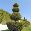 Stock Photo: Green shrubs