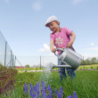 Flower watering — Stock Photo