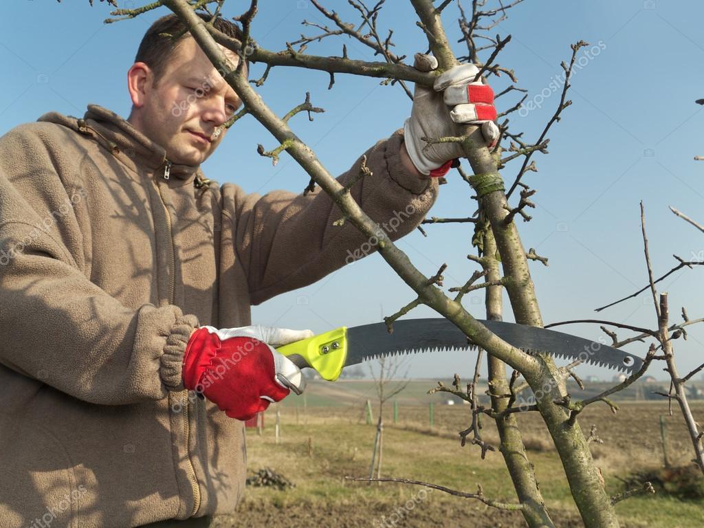 Tipos de poda nas árvores de fruto: conheça os principais