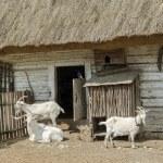 Постер, плакат: Three goats