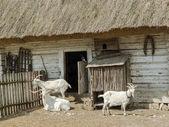 Three goats — Stock Photo
