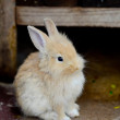 Stock Photo: White rabbits
