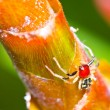 Stock Photo: Close up red spider live
