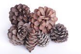 Close up pine cone — Stock Photo
