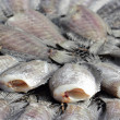 Snakeskin gourami fish drying in the outside — Stock Photo