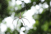 White spider wait with woven web spider — Stock Photo