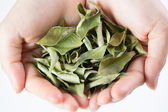 Close up Dried curry leaves  — Stock Photo