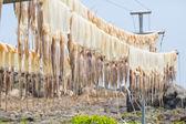 Sun dried squid hanging  — Stock Photo