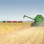 Combine harvesting soybeans — Stock Photo #11793200