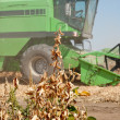 Harvesting soybeans — Stock Photo #12461102