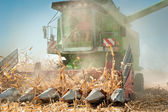 Harvesting corn — Stock Photo