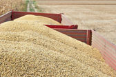 Tractor trailer with soy bean — Stock Photo