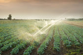 Irrigation of vegetables — Stok fotoğraf