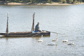 Angler and swans — Stock Photo