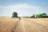Harvesting of soy bean — Foto Stock